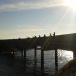 Łowimy ryby - Droga Atlantycka